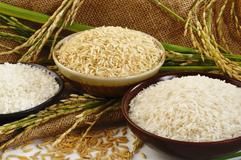 Gạo Màu Sorter